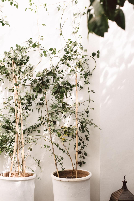 Riad Dar Kawa Marrakech - Ophelie's Kitchen Book - Ophelie Lauret